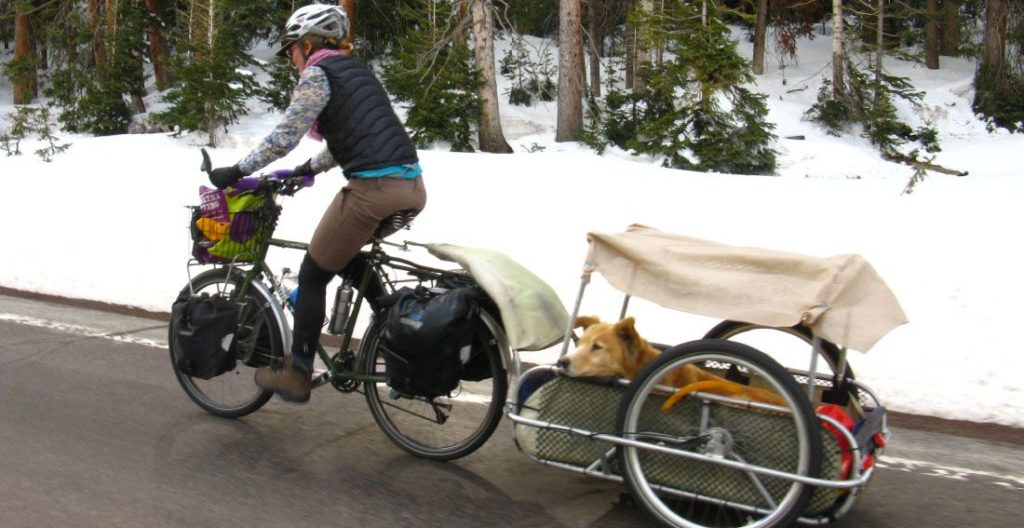 How to Pick a Bike Carrier for Dogs