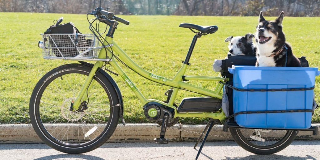Which Kindof Dogs Do Best in a Dog Bike Basket